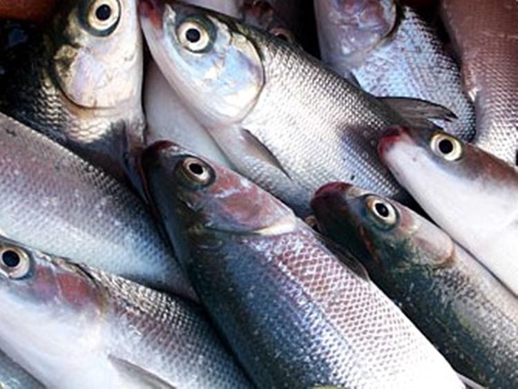 Milkfish Benefits